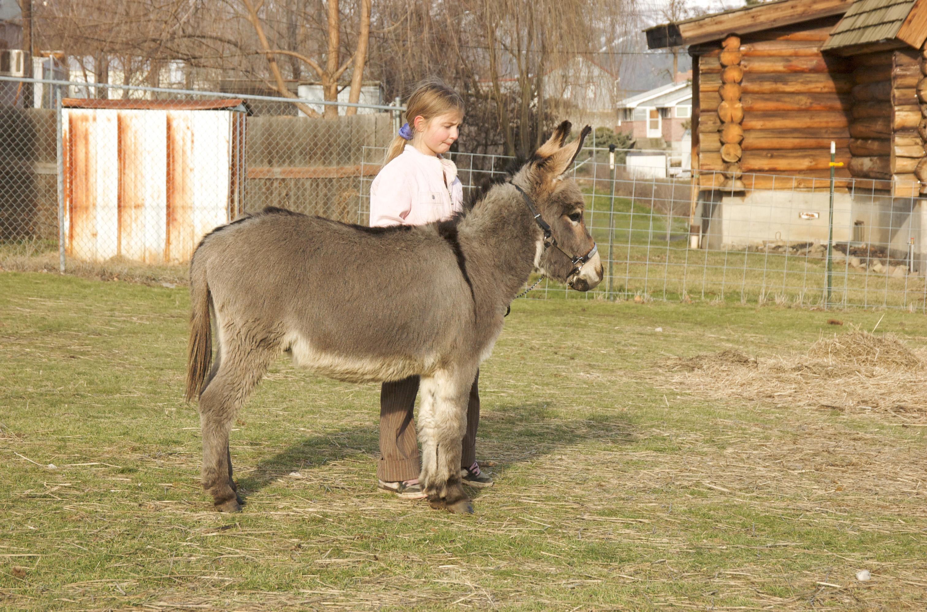 honkey donkey coloring pages - photo#35